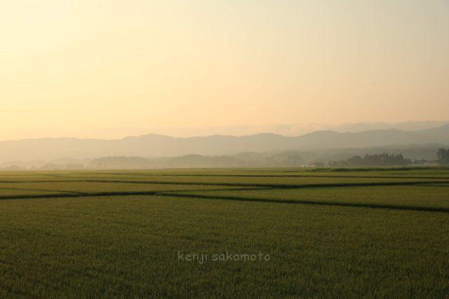 早朝の田園風景